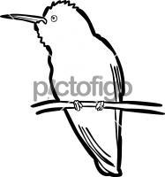 Xantuss HummingbirdFreehand Image