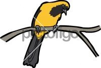 Yellow Backed OrioleFreehand Image