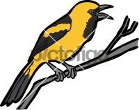 Yellow Backed OrioleFreehand Image