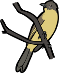 Yellow Bellied Bulbul freehand drawings