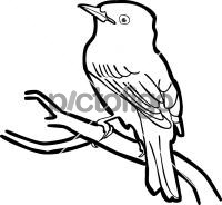 Yellow Bellied FlycatcherFreehand Image