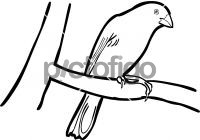 Yellow Bellied SeedeaterFreehand Image