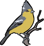 Yellow Tit freehand drawings