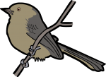 Yellow Tyrannulet freehand drawings