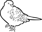 Zebra Dove freehand drawings