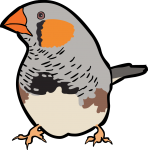 Zebra Finch freehand drawings