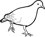 Zenaida Dove freehand drawings