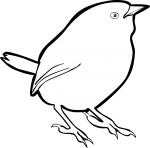 Zimmers Tapaculo freehand drawings