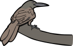 Zimmers Woodcreeper freehand drawings