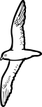 Zinos Petrel freehand drawings