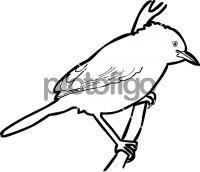 Zitting CisticolaFreehand Image