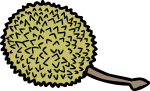 Durian freehand drawings