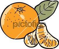 MandarineFreehand Image