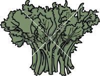 Broccoli RabeFreehand Image